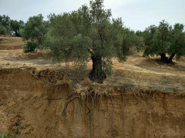 Jaén se queda sin suelo fértil. 126003893--624x468