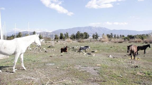Doce caballos abandonados encuentran un hogar