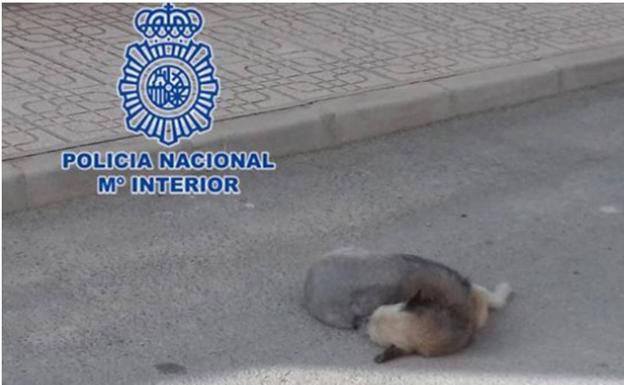 El perro atropellado por su dueño./POLICÍA NACIONAL