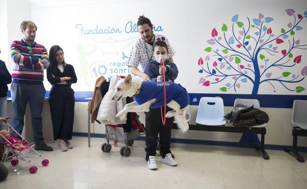 3 perros terapeutas atienden a niños en el Materno Infantil en Granada - mas torrencito