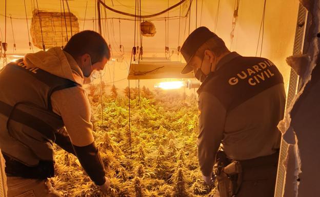 Intervienen una plantación de marihuana./IDEAL