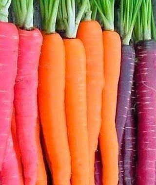 Sabias Que Las Zanahorias No Eran Naranjas Ideal Sin embargo, comer demasiadas zanahorias puede hacer que tu piel desarrolle un tono anaranjado. las zanahorias no eran naranjas